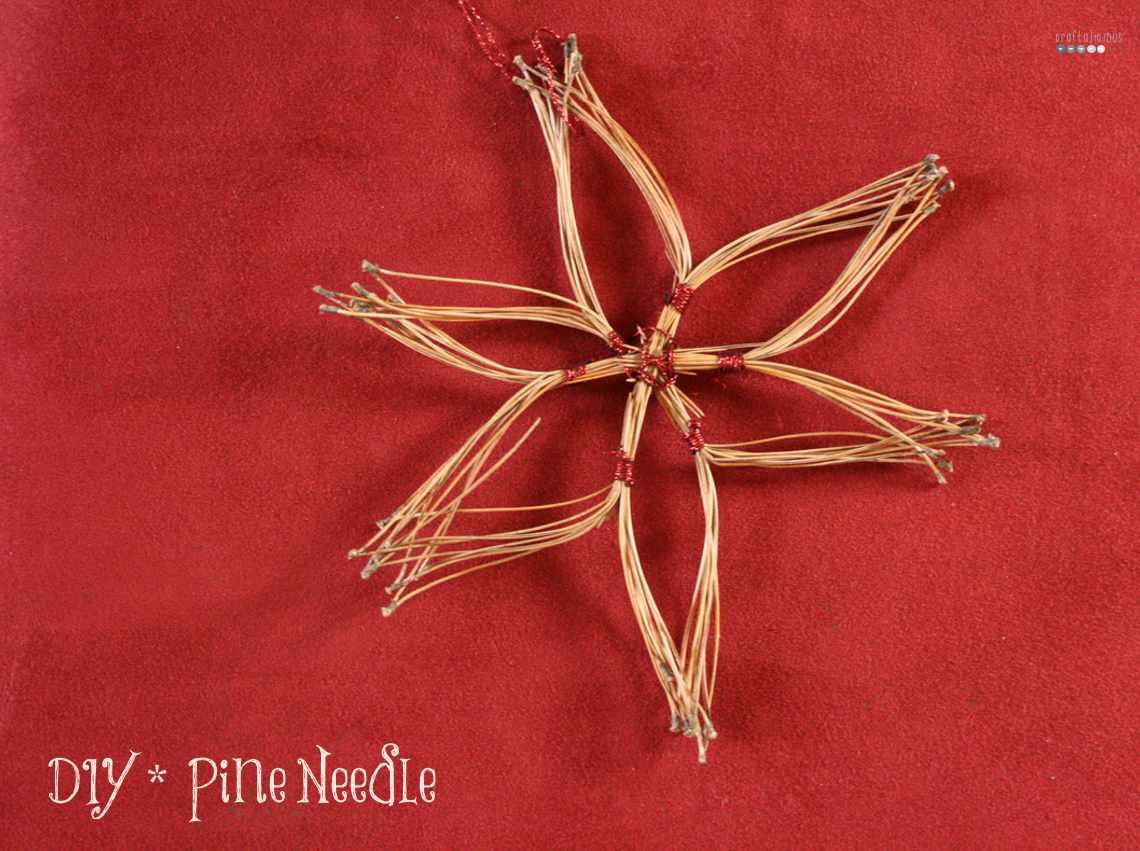 star of pine needles