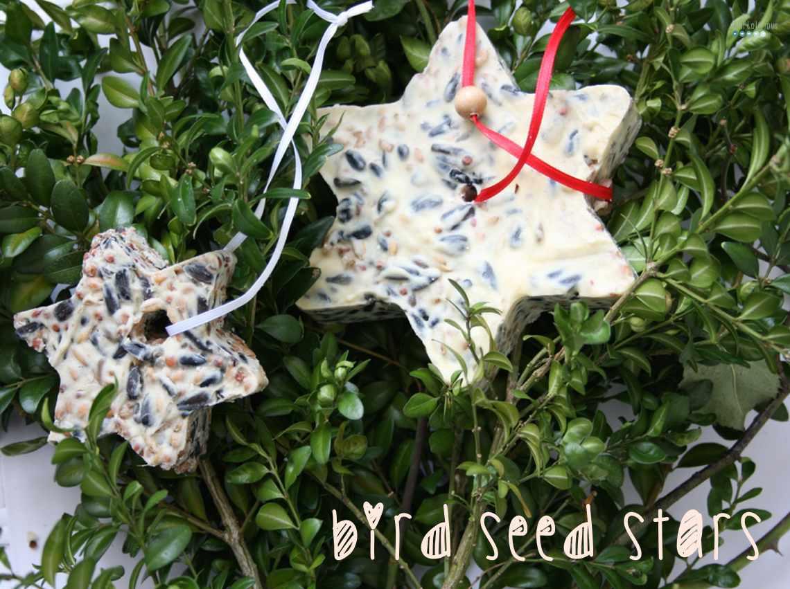bird seed star