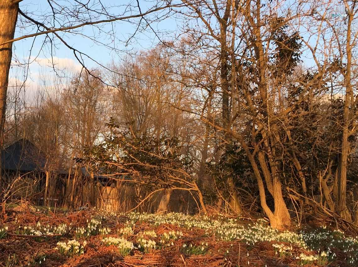 spring Spreewald