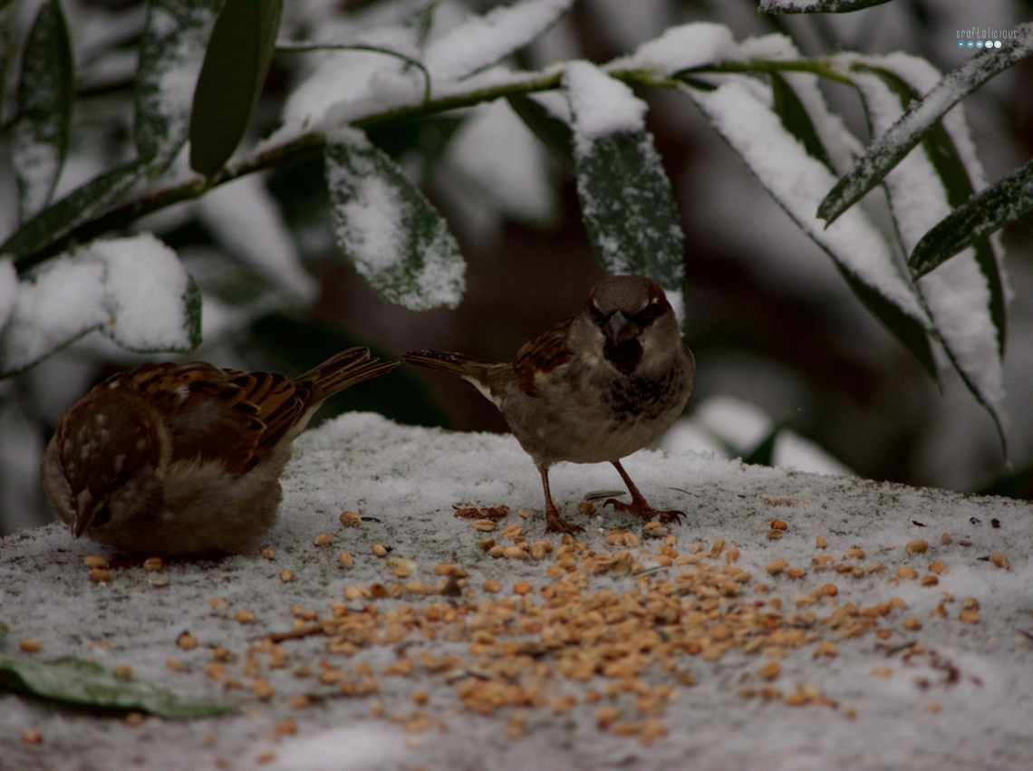 Feeding Sparrows in Snow