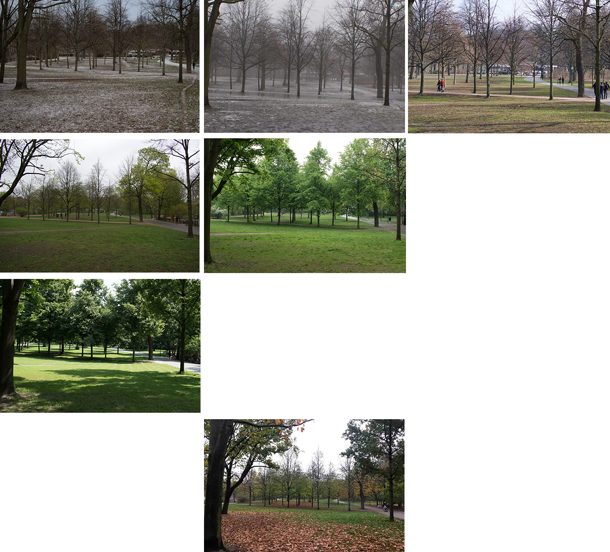parklife photo project trees Volkspark Friedrichshain