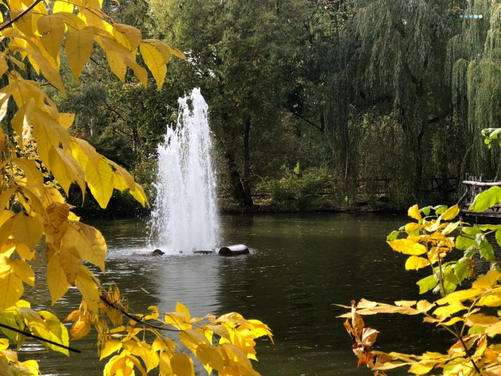 craftaliciousme seeking creative life fall foliage with sprinkler Berlin