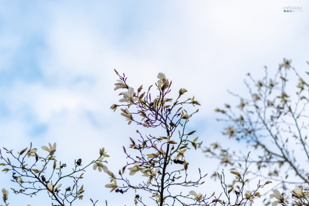 spring bucket list seeking creative life blue sky with magnolia blossom