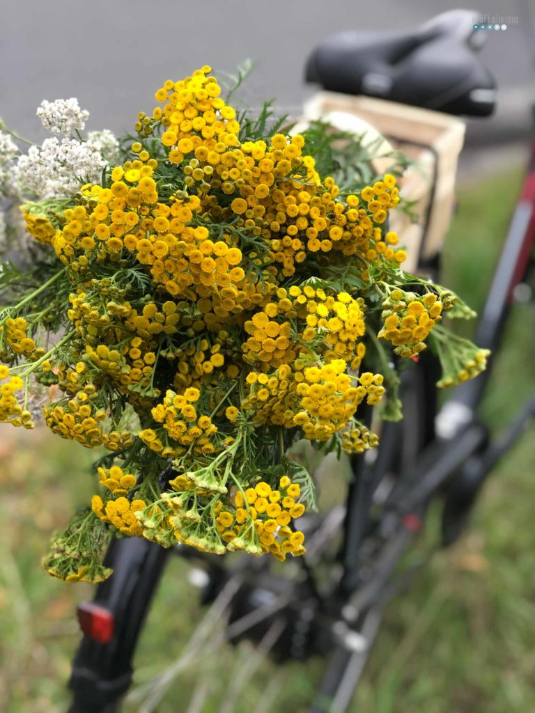 bike with flowers called cow bitter while enjoying summer at home