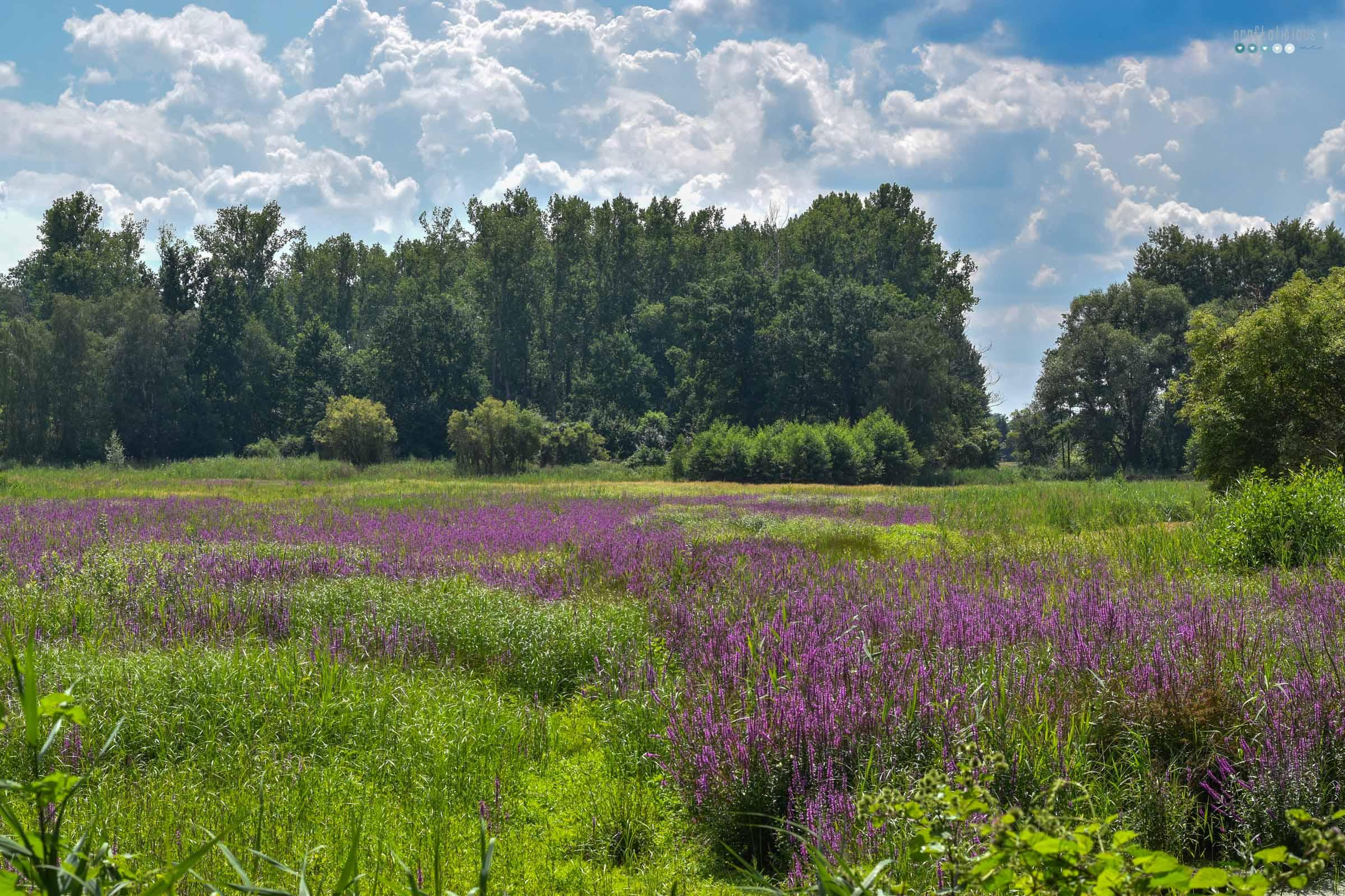 craftaliciousme seeking creative life enjoying summer at home in Brandenburg