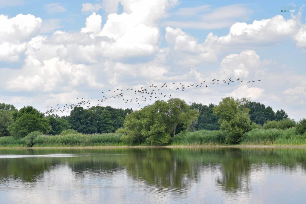 enjoying summer at home lake view with birds craftaliciousme seeking creative life