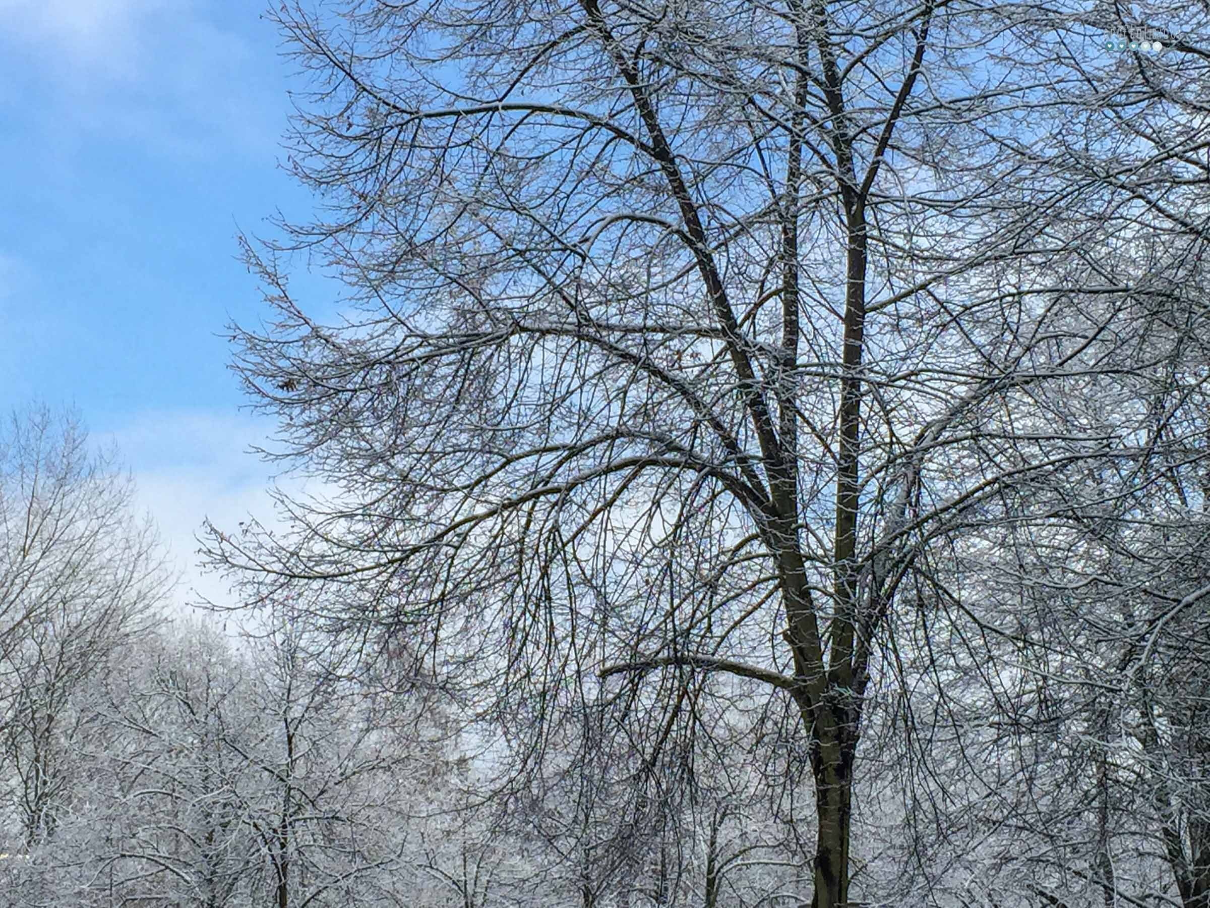 winter bucket list 2020 with snow dusted trees with blue sky craftaliciousme seeking creative life