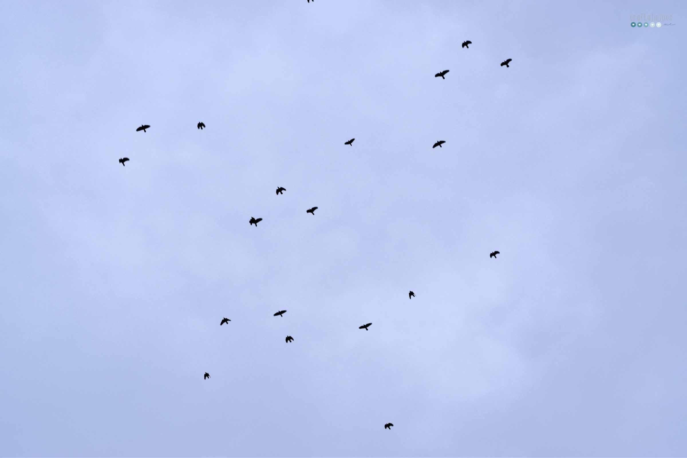 currently in march craftaliciousme seeking creative life birds in blue sky