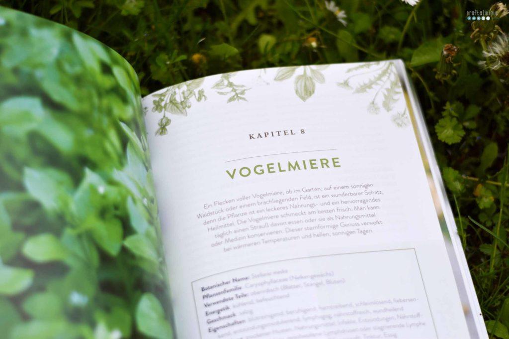 Gathering herbs and wild remedies Vogelmiere plant portrait