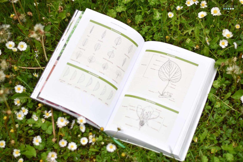 Gathering herbs and wild remedies botany characteristics