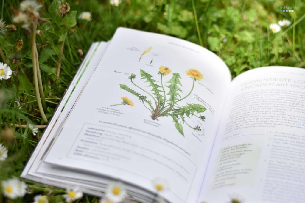 Gathering herbs and wild remedies botany illustration
